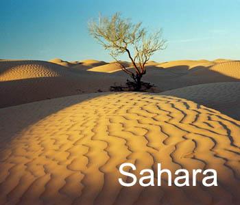 t_sahara